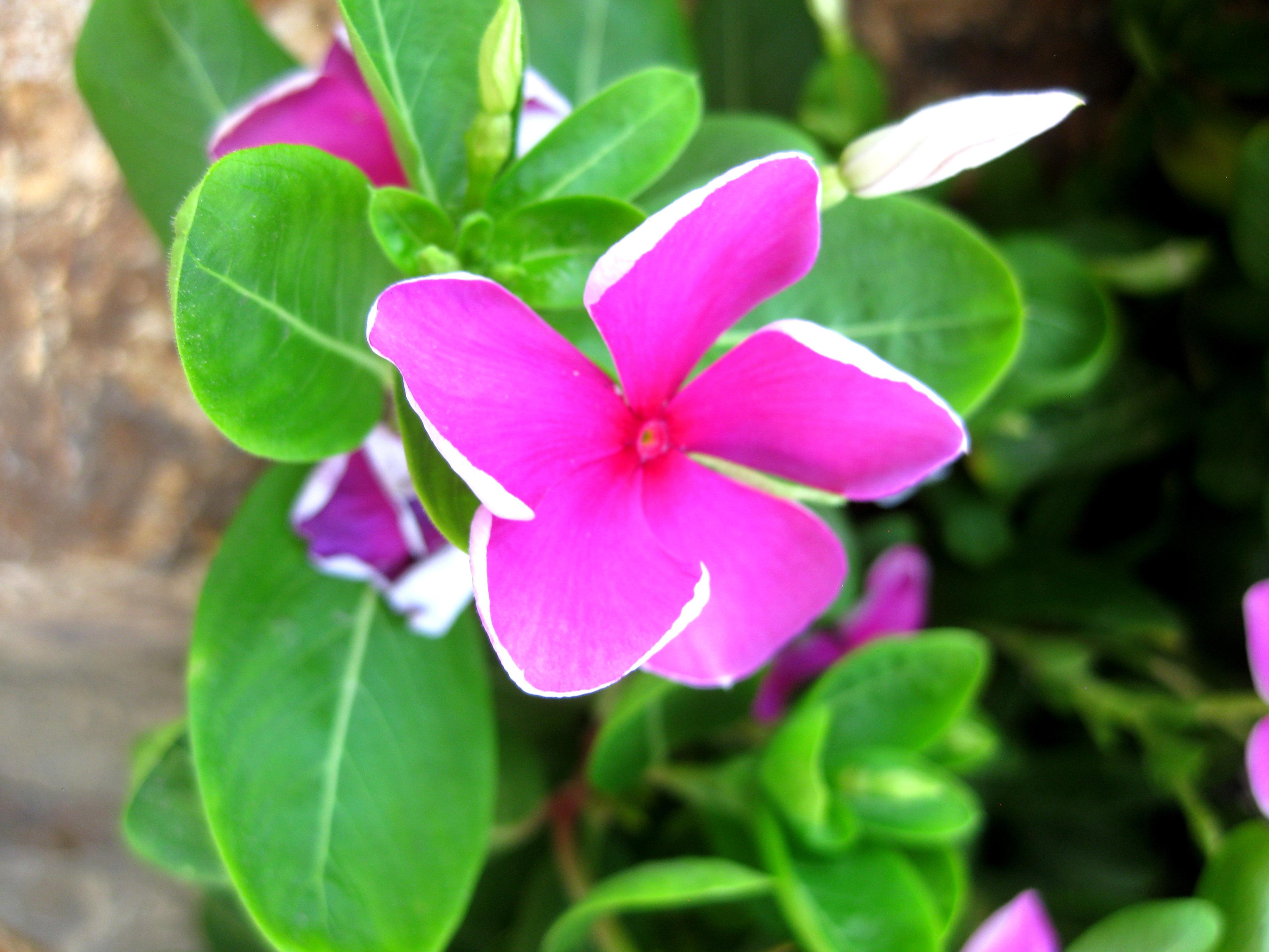 Israeli Flower