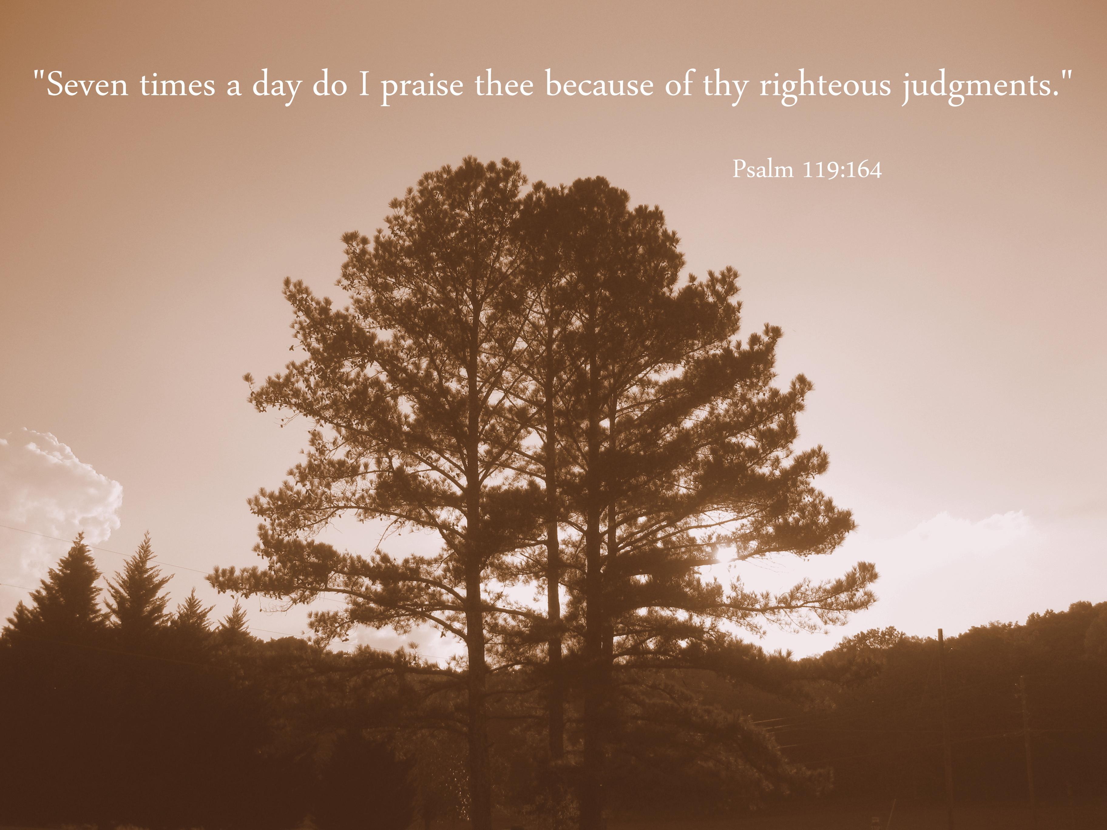Psalm 119:164